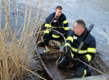 FOTO: Câine salvat după ce a căzut într-un lac din Cisnădie